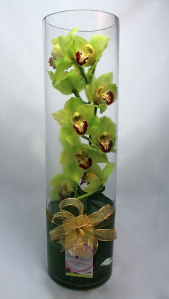 Irresistible Orchid – Green