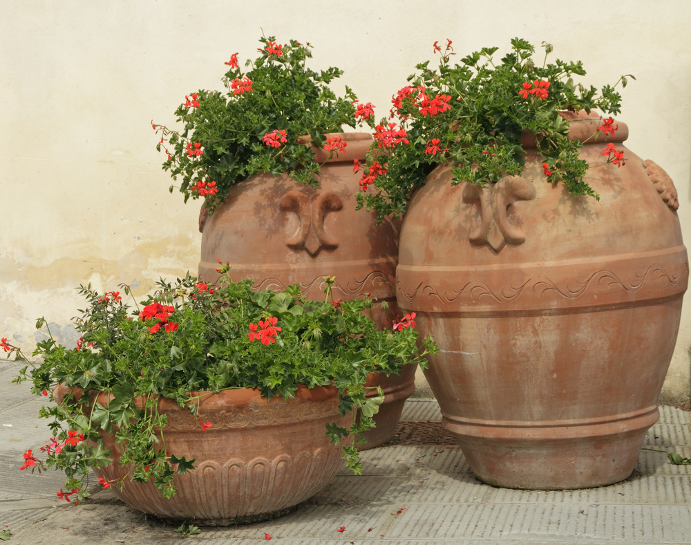 finding the best flowers to use in your terra cotta pots
