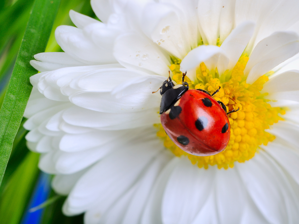 How To Stop Bugs From Eating Buds Blossoms And Leaves Flowers Of The Field Las Vegas