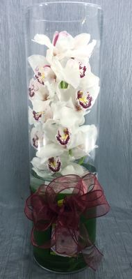 Irresistible Orchid – White